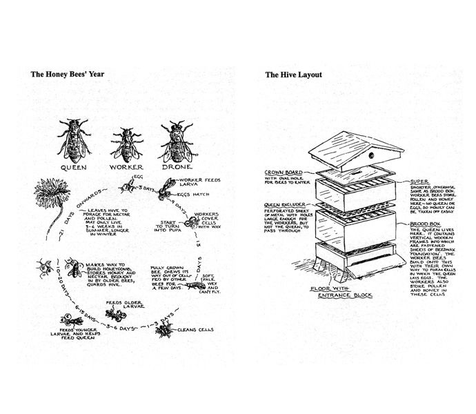 'Beekeeping for Beginners' - The Kitchen Garden