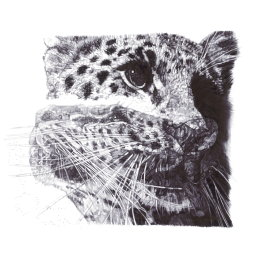 'Our Loss', Amur Leopard, 2013 Black Biro Drawing