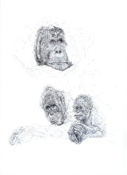 'Orangutans' 2014 50 Limited Edition Signed and Numbered Prints for WCS Malaysia Program.  £35
