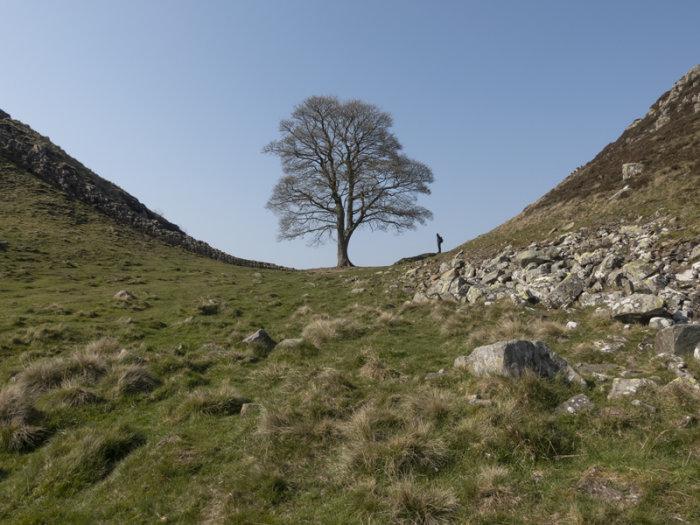 Sycamore Gap Hadrians Wall Northumberland