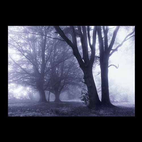 A misty wood in Dorset