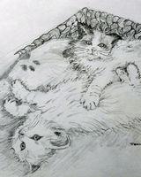 Caroles kittens