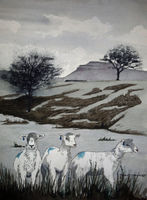 Sheep and Ingleborough