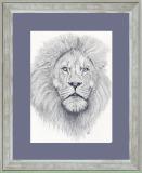 animals - pencil drawings