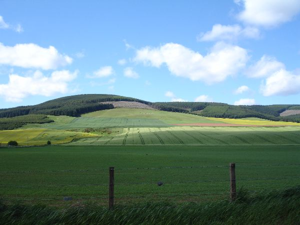 Fields, The Mearns