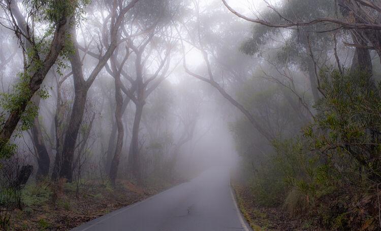0830 foggy road