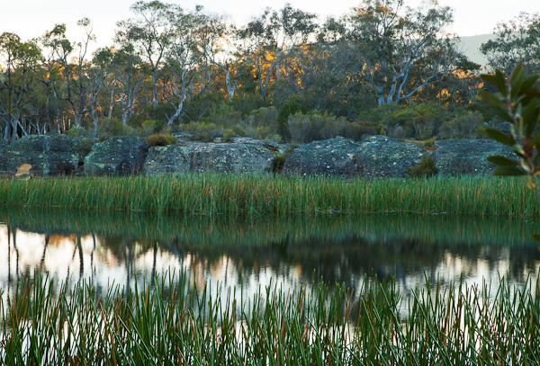 Sunrise over bush reflections