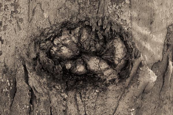 Gumtree knot