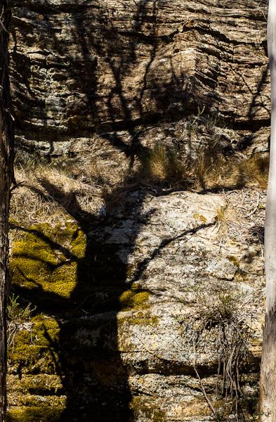 Shadow tree and moss