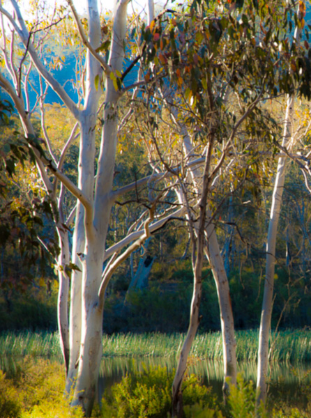 Gums and afternoon light
