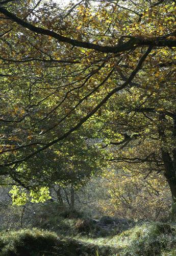 Black Clough Trees