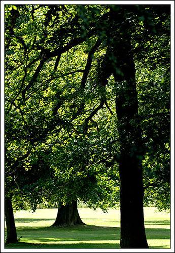 Bretton Trees