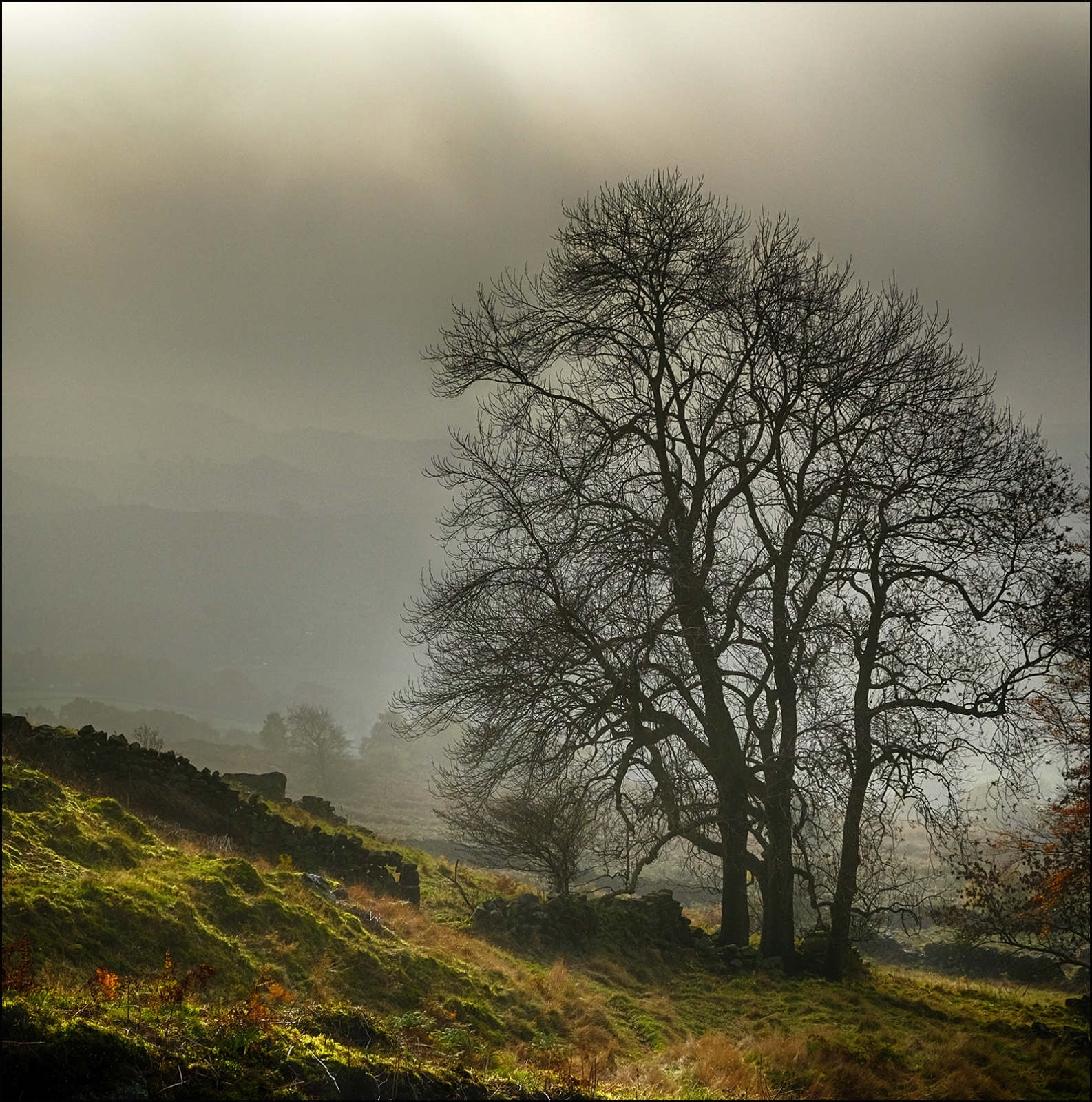 Tree in the morning mist