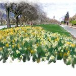 Daffodils, Savile Park, Halifax