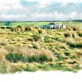 Feeding sheep, Cragg Vale