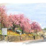 Blossom at Ripponden