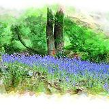 Bluebells at Hardcastle Crags