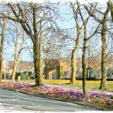 Crocuses outside Crow Wood Park - Sowerby Bridge and Calderdale 2011 calendar