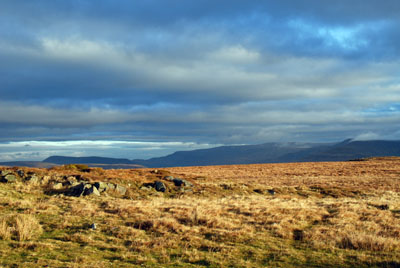 Early morning on the moor