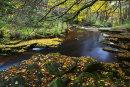Autumn on the Afon Hepste