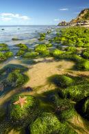 Shoreline view, Caldey Island