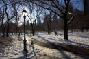 Central Park after a snowfall, February.