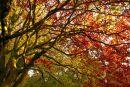 Autumn leaves, Dyffryn Gardens