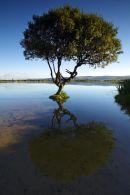 Kenfig Pool tree