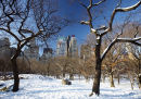 Central Park, February