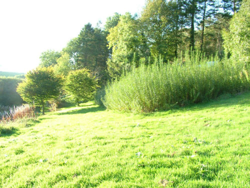Tir Grug Willow Crop 2011