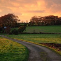 Country Lane at Dusk, Apse Heath