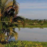 Cuban lake near Vinales