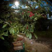 Fisheye Apple Boxes