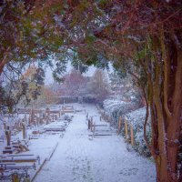 Snowy Cemetary, Ryde