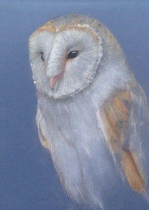 Sketch Barn Owl