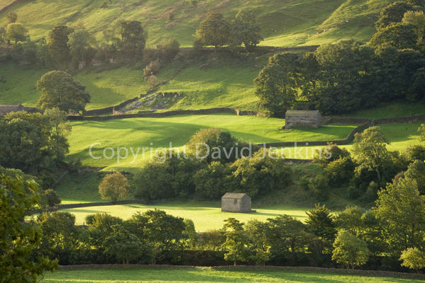 Morning light, Swaledale