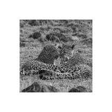 Mother & Child, Leopard Study 1