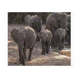 Elephant Study 3, Across the years