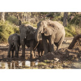 Elephant study 4, at the waterhole