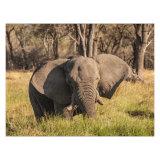 Elephant on the Khwai River, Botswana