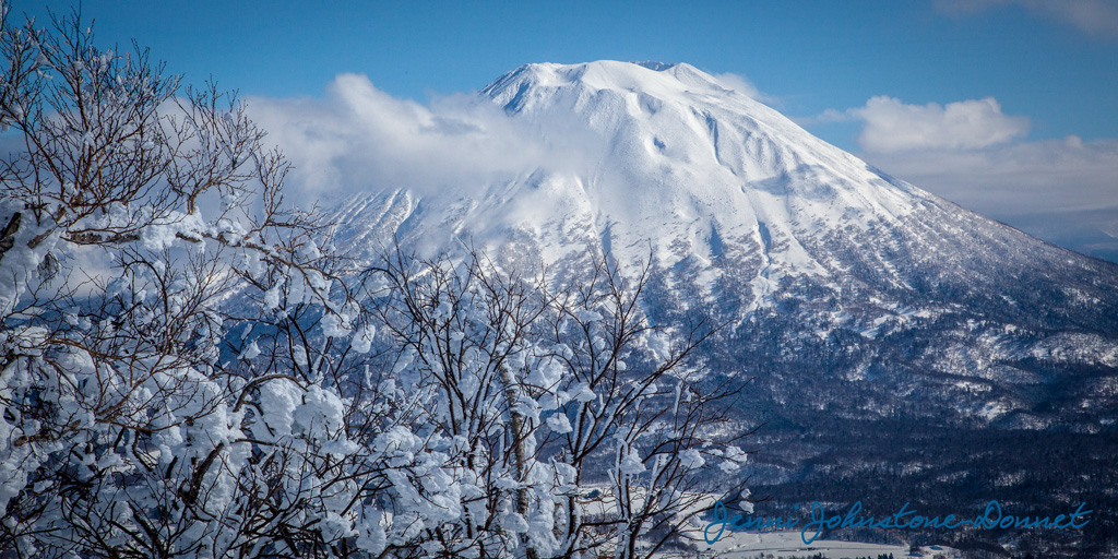 Snow Blossoms & Mt. Yotei