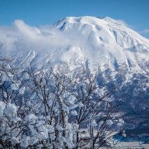 Snow Blossoms & Mt. Yotei