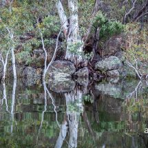 IMG 7960(Lake Reflection 1)