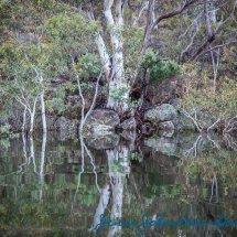 Lake Reflections 1