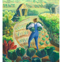 Allotment Cabbages