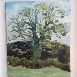 Ash tree at Netherhay