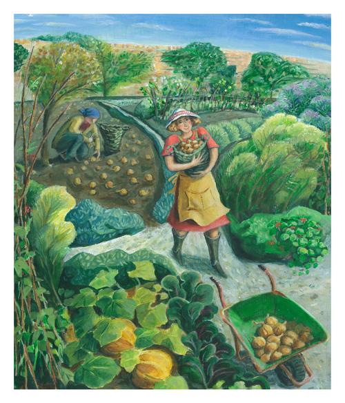 Onion Harvest