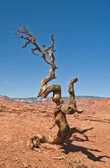 Dead Tree  Colorado