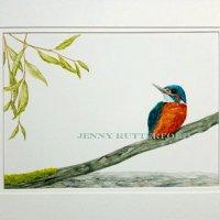 102-kingfisher