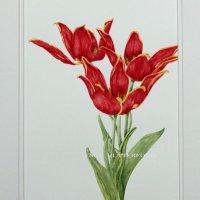 105-tulipoa
